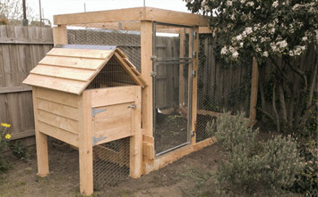 Chook house and strawyard