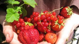 Free Talk on Growing Fruit and VEG in small containers