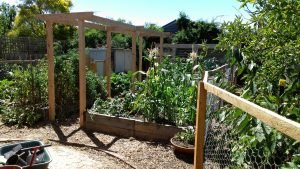 Free Talk on Organic Backyard Veggie Production & Plant Basics