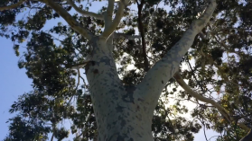 Understanding plants: Trees