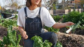 VEG team member Clare harvesting silverbeet at the Melbourne Food Hub urban farm in Alphington